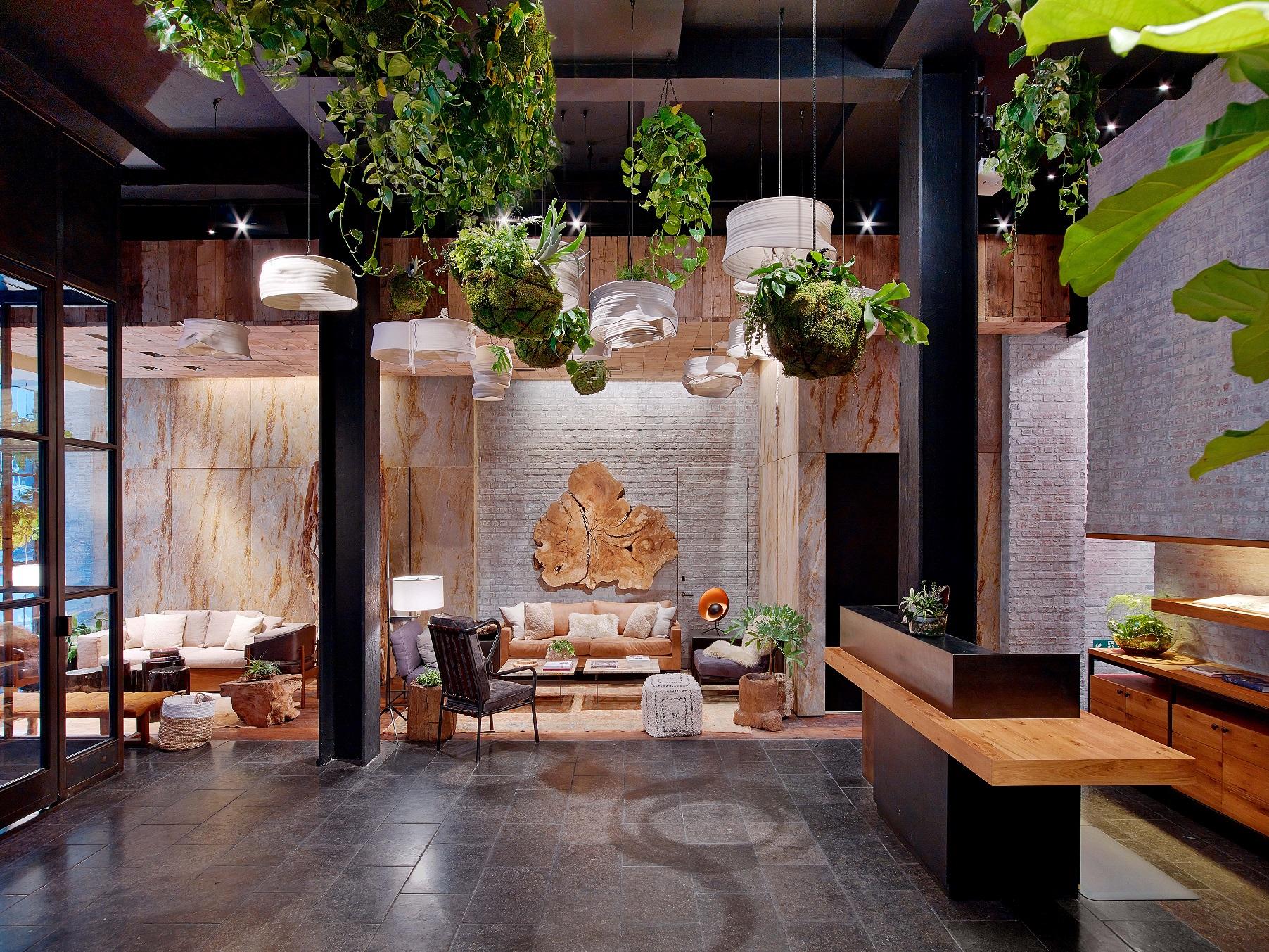 Hotel Lounge Plantas Decoração Madeira Natureza