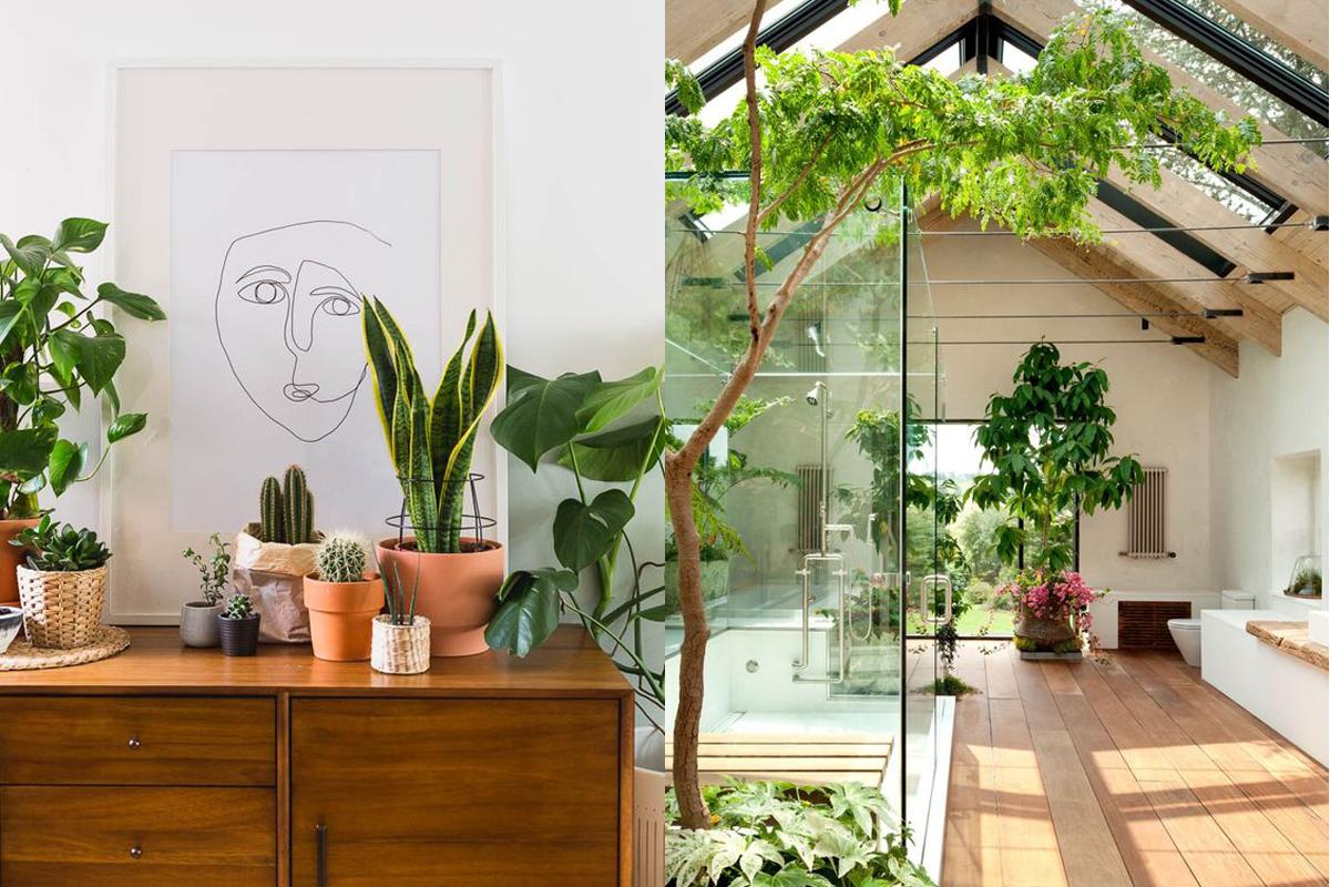 Casa Design Biofílico Plantas Decoração